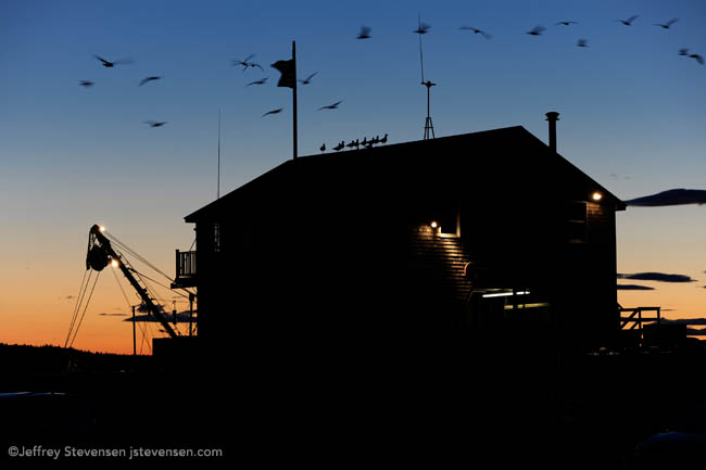 Gulls, Evening, Port Clyde, Maine